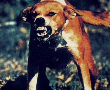 Бясно псе