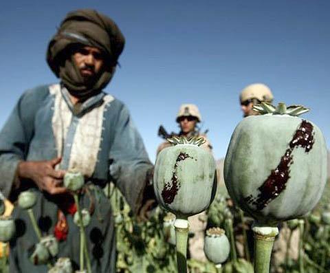 Войници на НАТО охраняват опиумно поле.