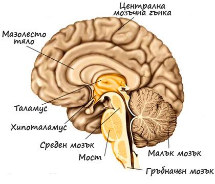 Окултна физиология