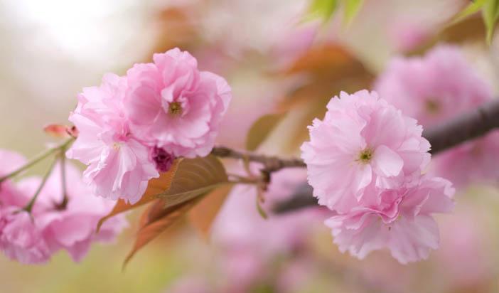 Цветчета и фосфор