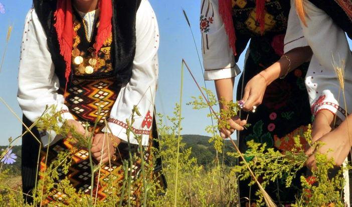 Тракийско наследство в българския фолклор (5): Бране на треви, цветя и клонки