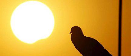 Един гълъб, който ме освободи от страх и ми донесе поуки